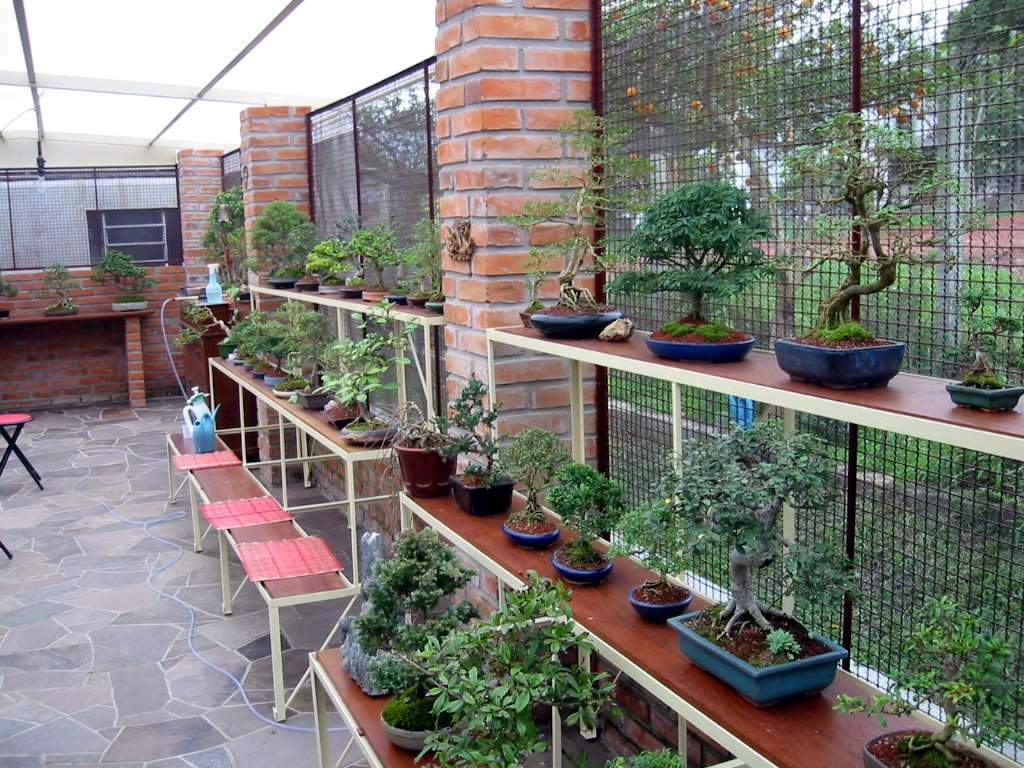 File Bonsai Nursery Andreasd Jpg