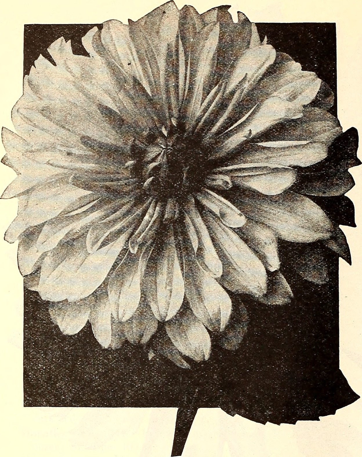 California gardening (1929) (20506201462).jpg English: Title: California gardening Identifier: californiagarden1929germ (find matches) Year: