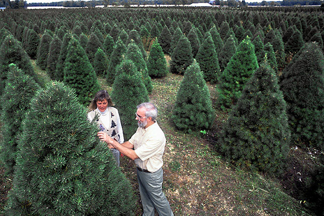 Christmas tree farm East Lansing MI