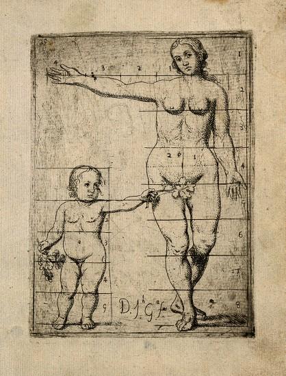 Cuerpo Desnudo Femenino, Con El Sistema Endocrino