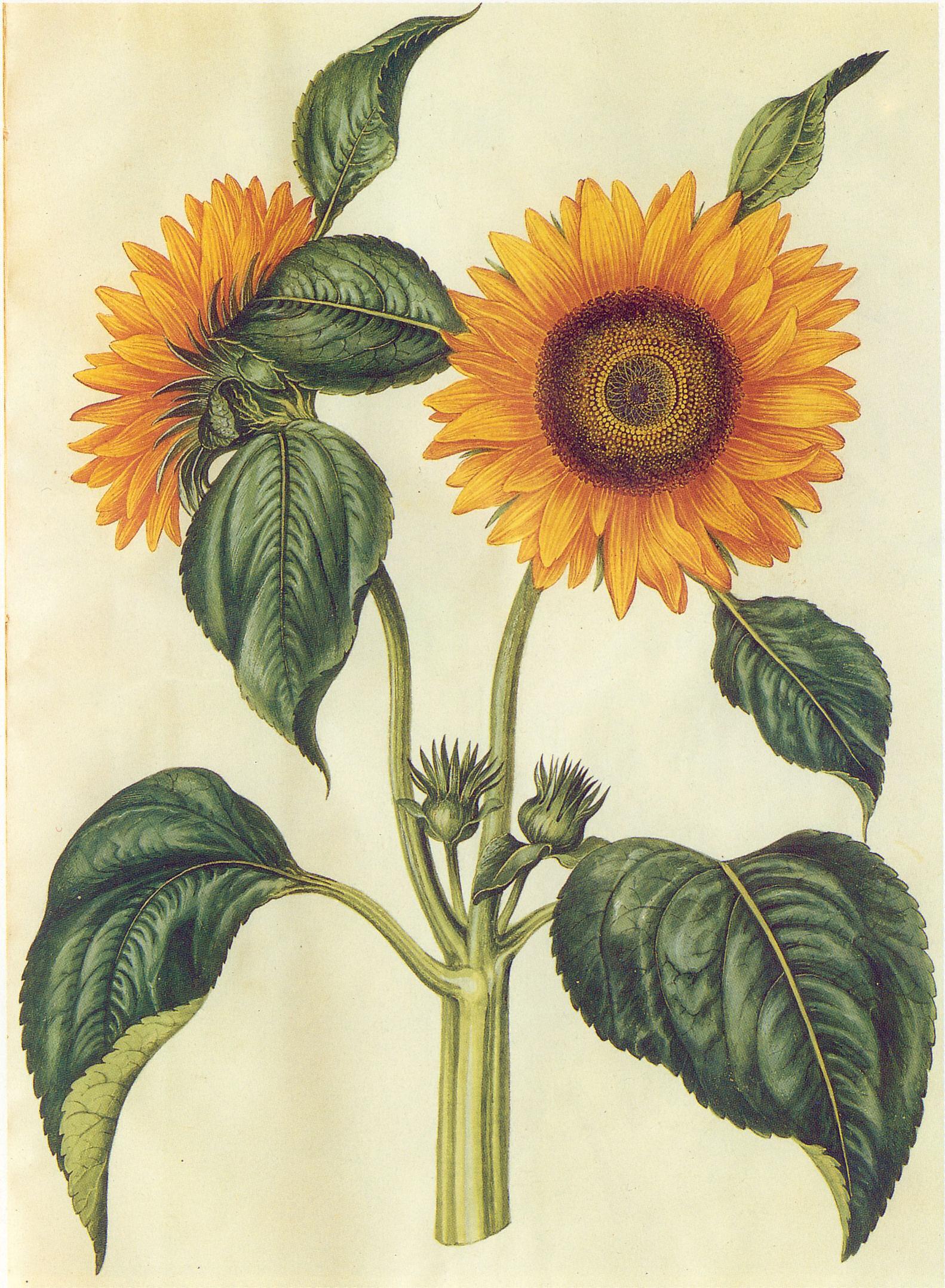Dibujos De Flores Para Decorar Tartas