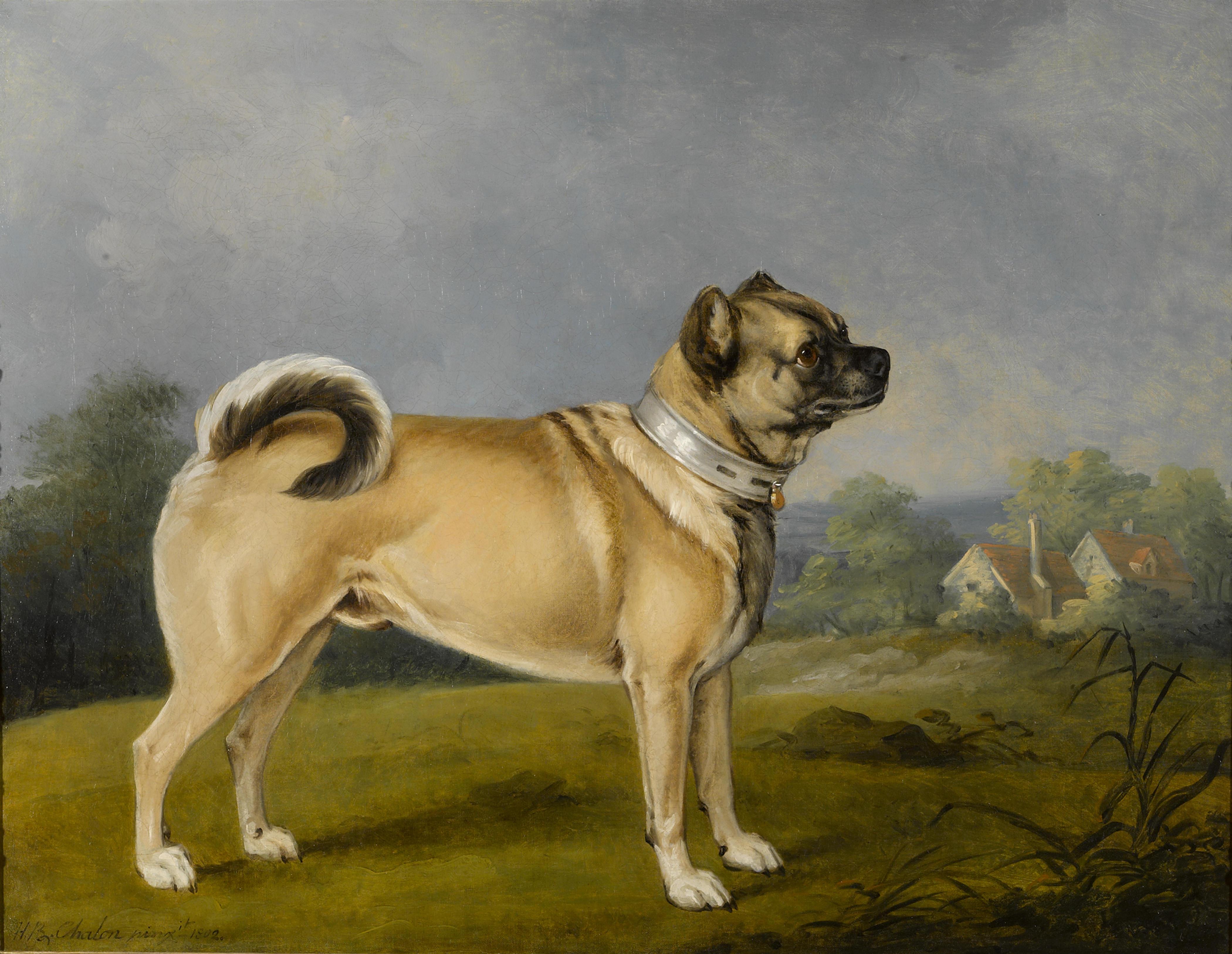 cachorro do homens de preto mib pug