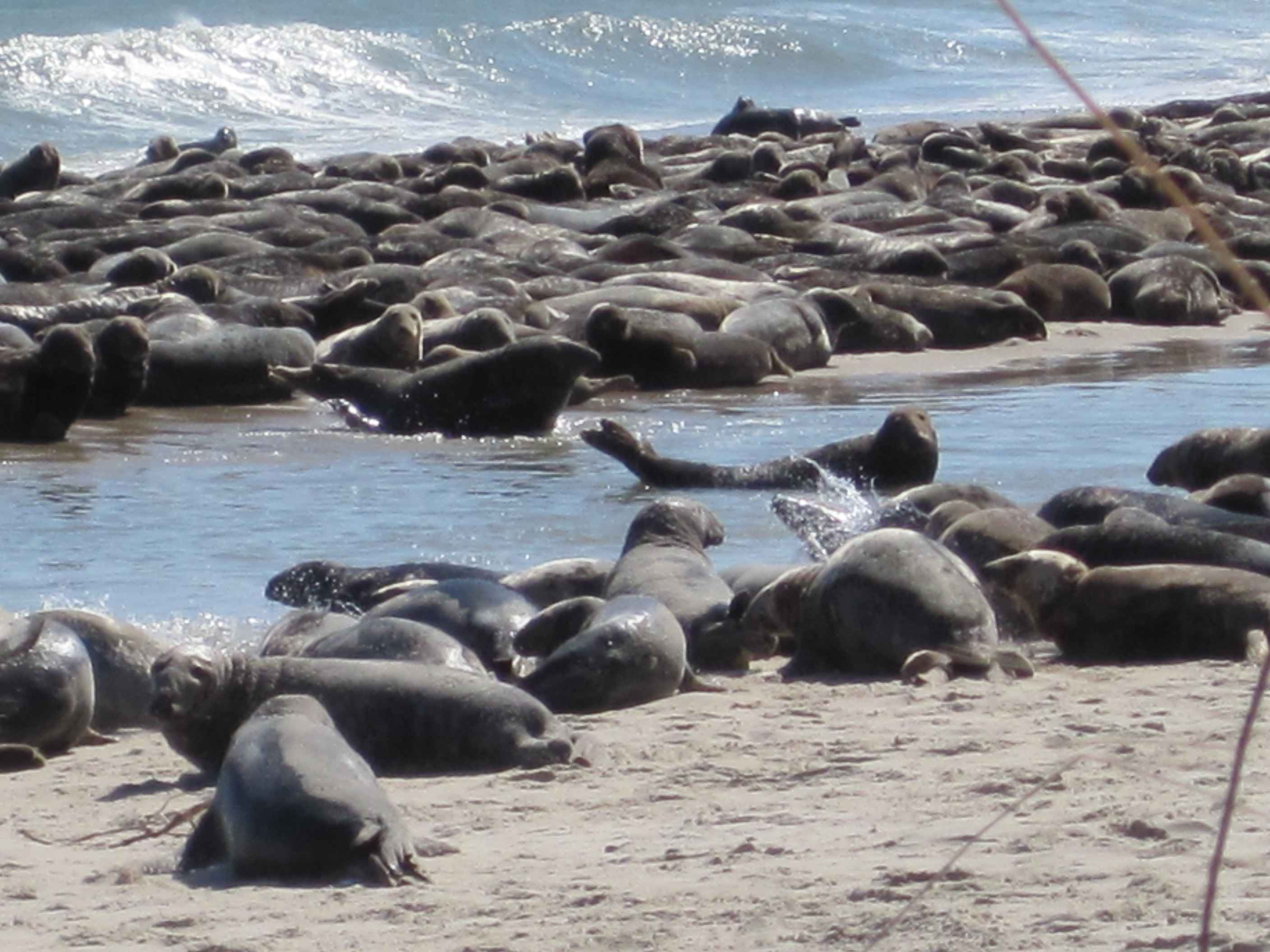 A Group Of Seals 65