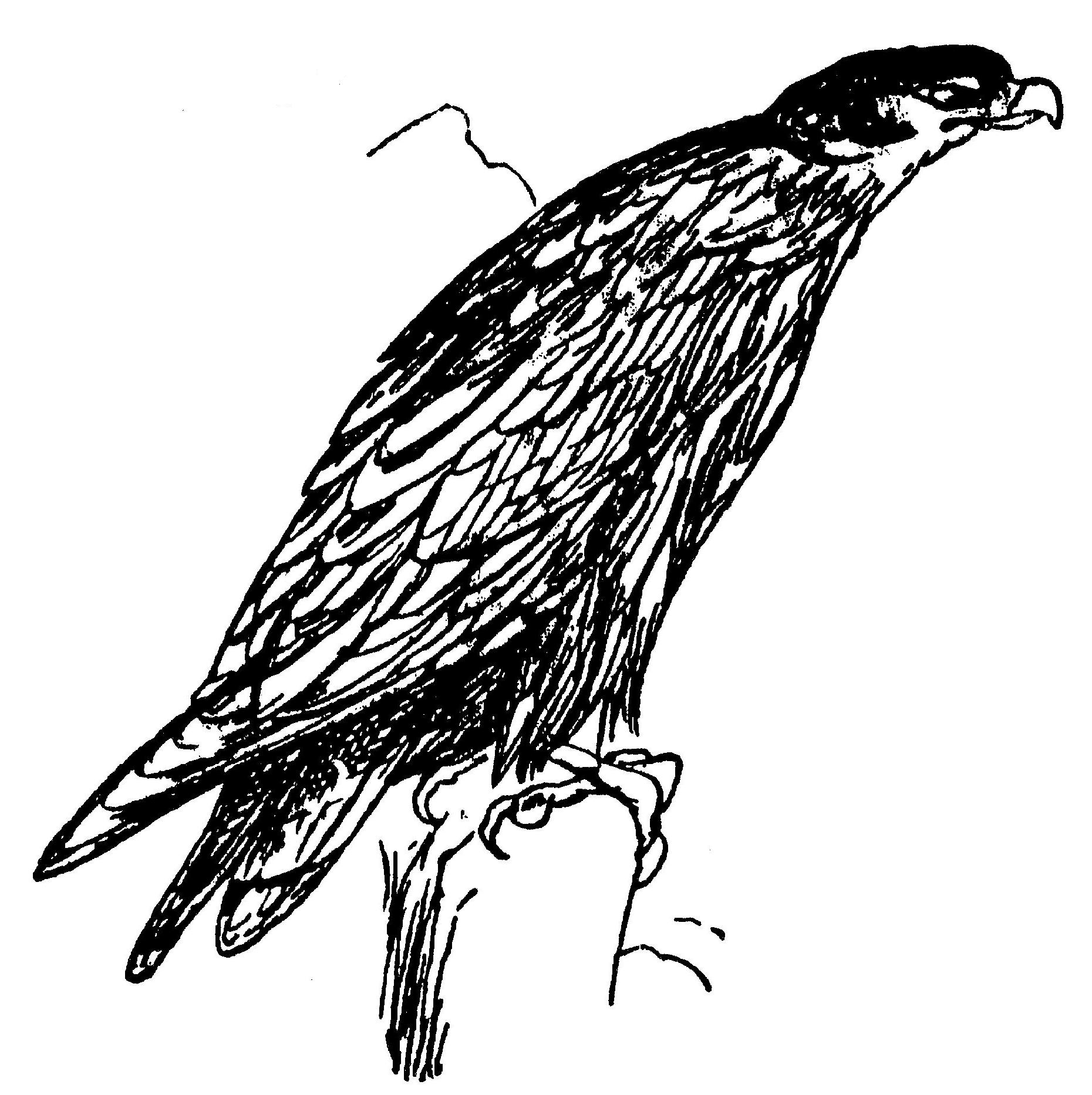 Lear 3 - Eagle.jpg