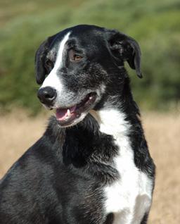 McNab Dog - Dog Scanner
