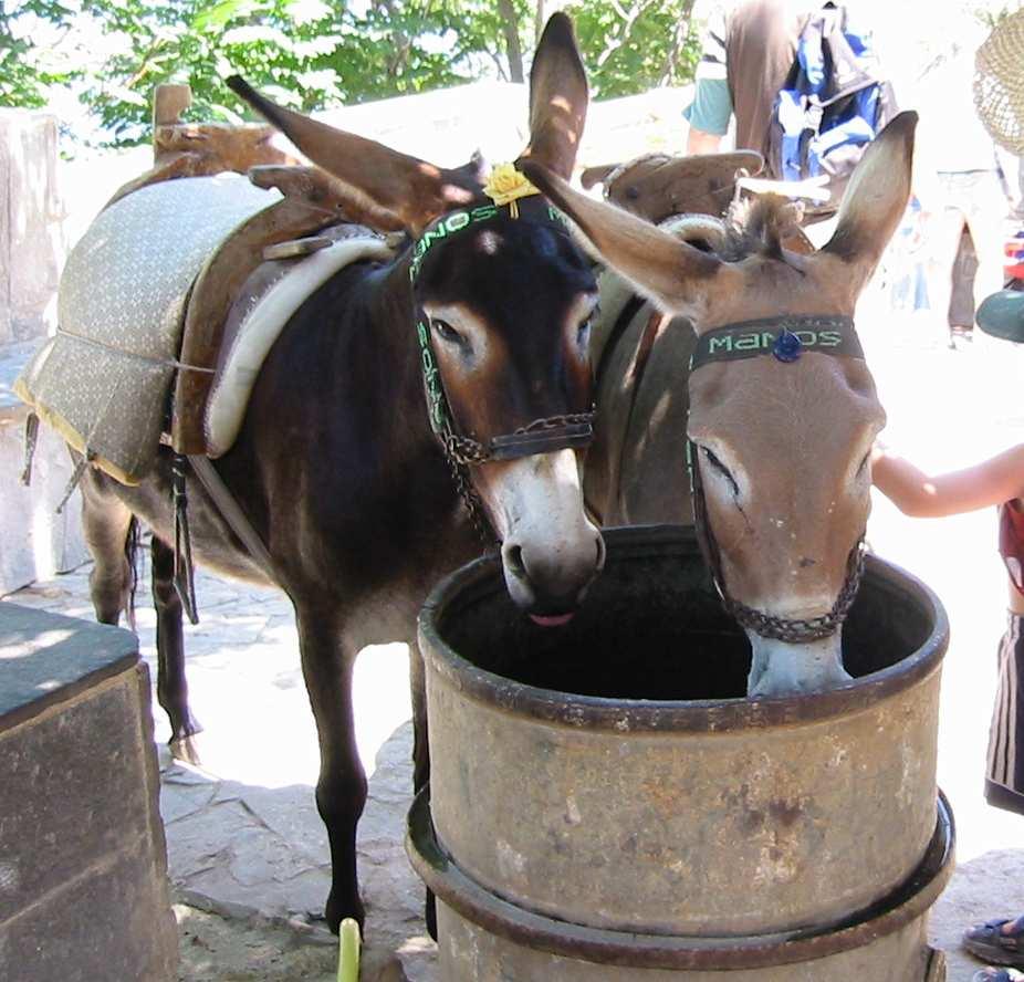 Mule Horse Donkey