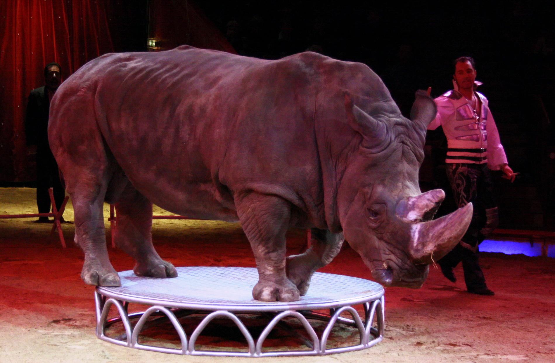 FileNashorn Circus Krone MARTIN LACEY JrJPG Wikimedia