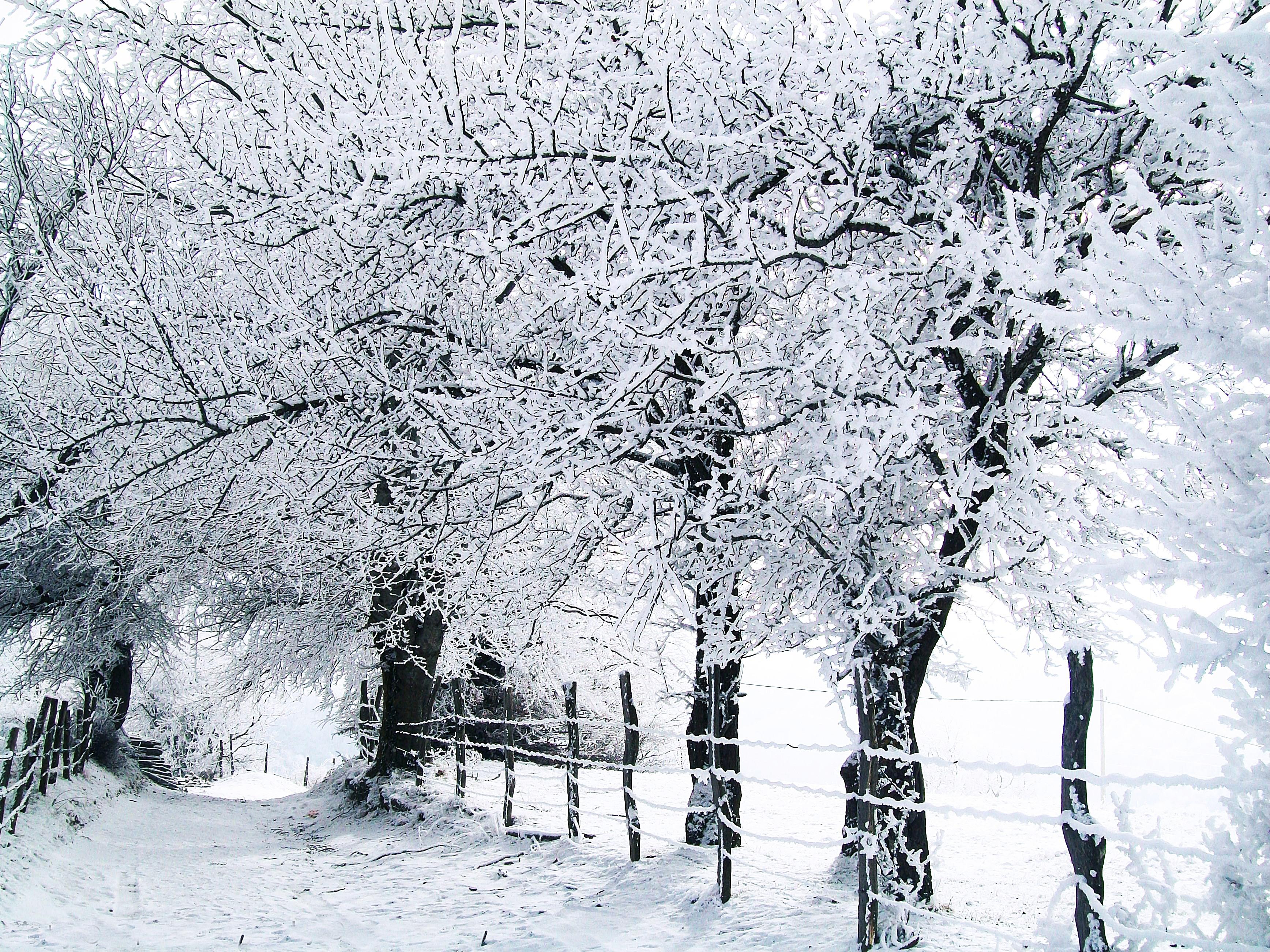 Foto nga natyra e bukur