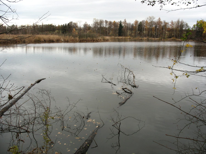 Nový rybník u Soběslavi