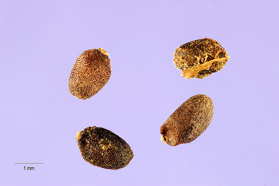 What Are Seed Cakes That Are In A Weight Managment