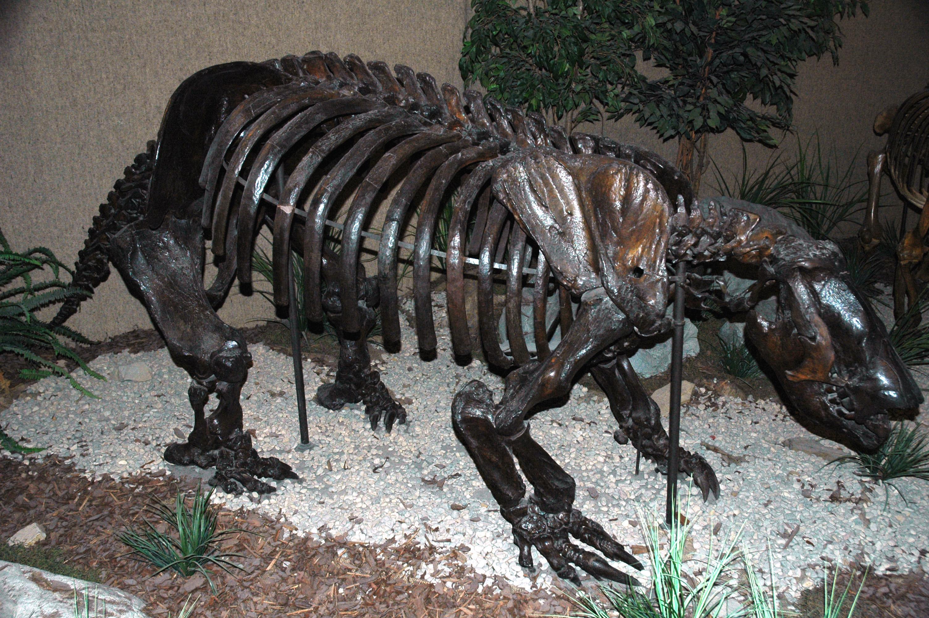 fileparamylodon harlani ground sloth la brea asphalt upper pleistocene rancho la