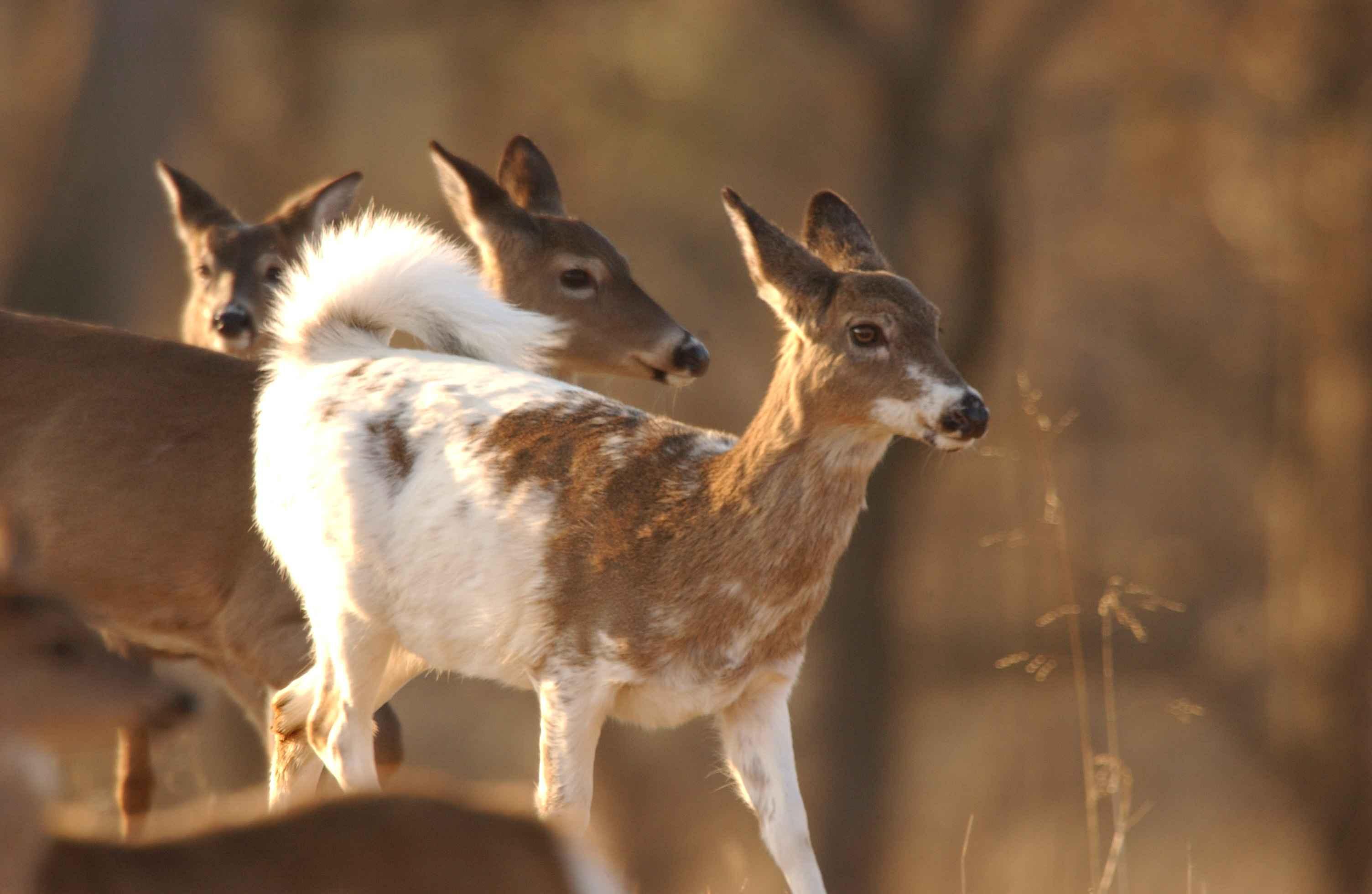 Image Result For Can Deer Eat