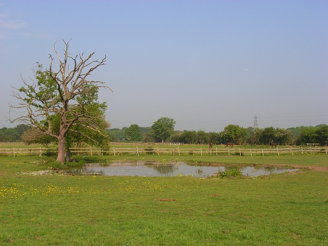 File:Pond in pasture, Holyport - geograph.org.uk - 814884.jpg