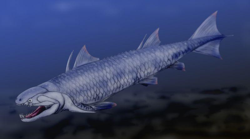 Artigo: Classe: Sarcopterygii; Subclasse: Dipnoi (Lungfish) Psarolepis_BW