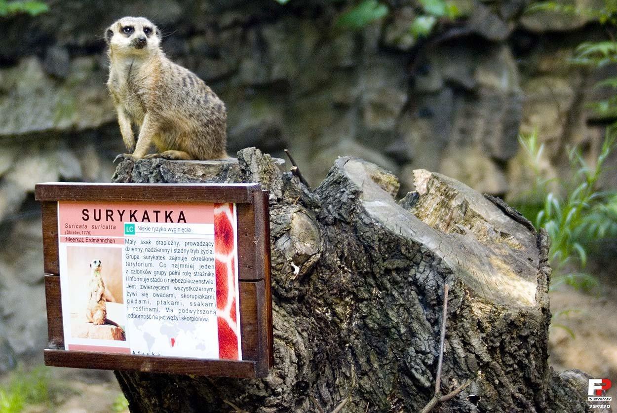 Wrocław, Miejski Ogród Zoologiczny