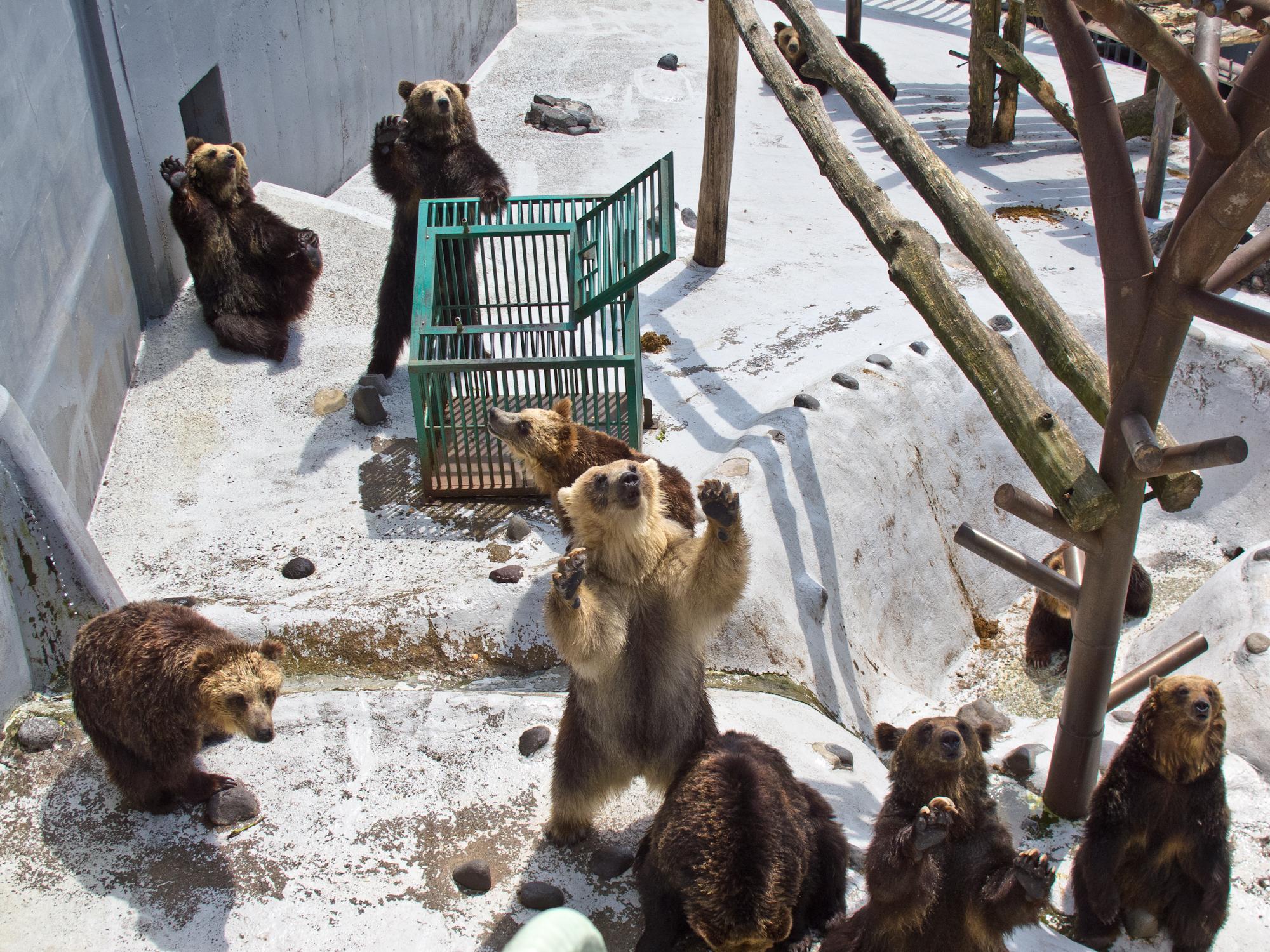 クマの画像 p1_11