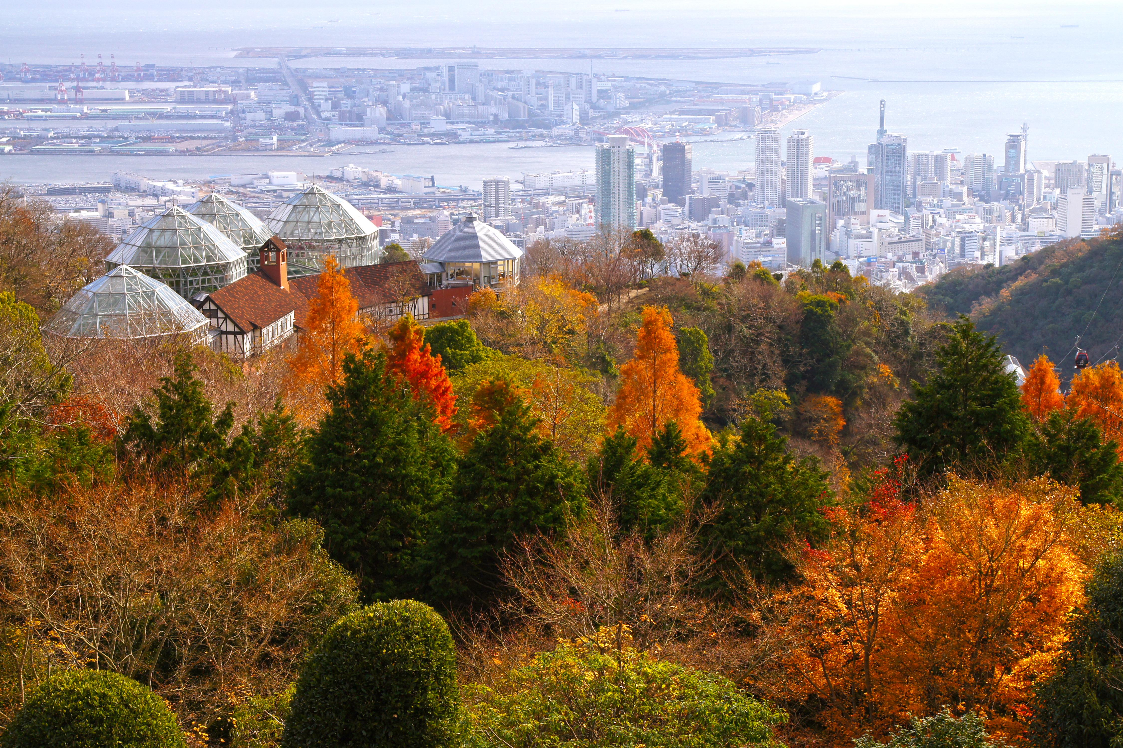 http://upload.wikimedia.org/wikipedia/commons/d/dd/121208_Nunobiki_Herb_Garden_Kobe_Hyogo_pref_Japan01s3.jpg