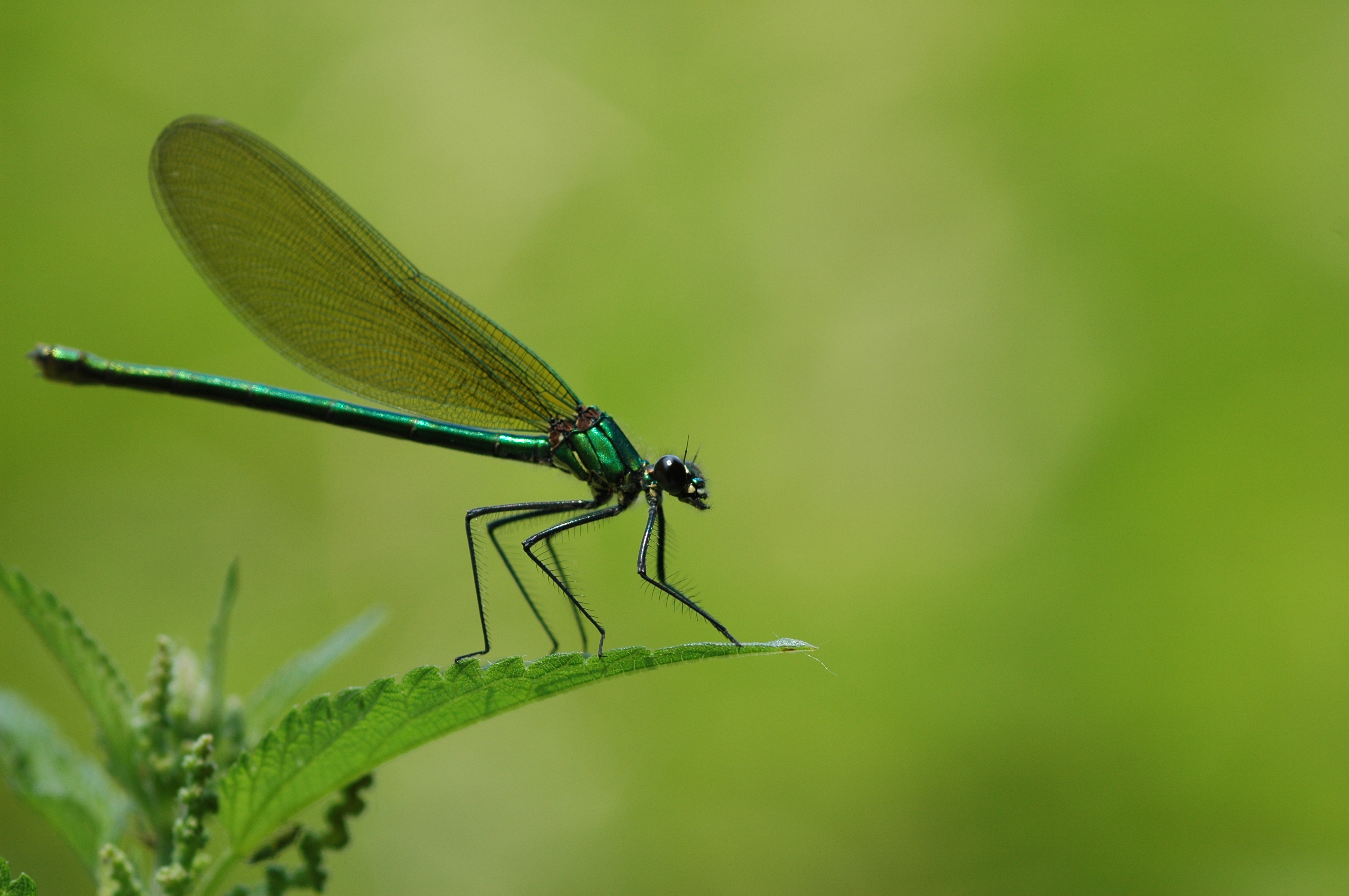 File:2010-06-29 (13) Dragonfly.JPG - Wikimedia Commons