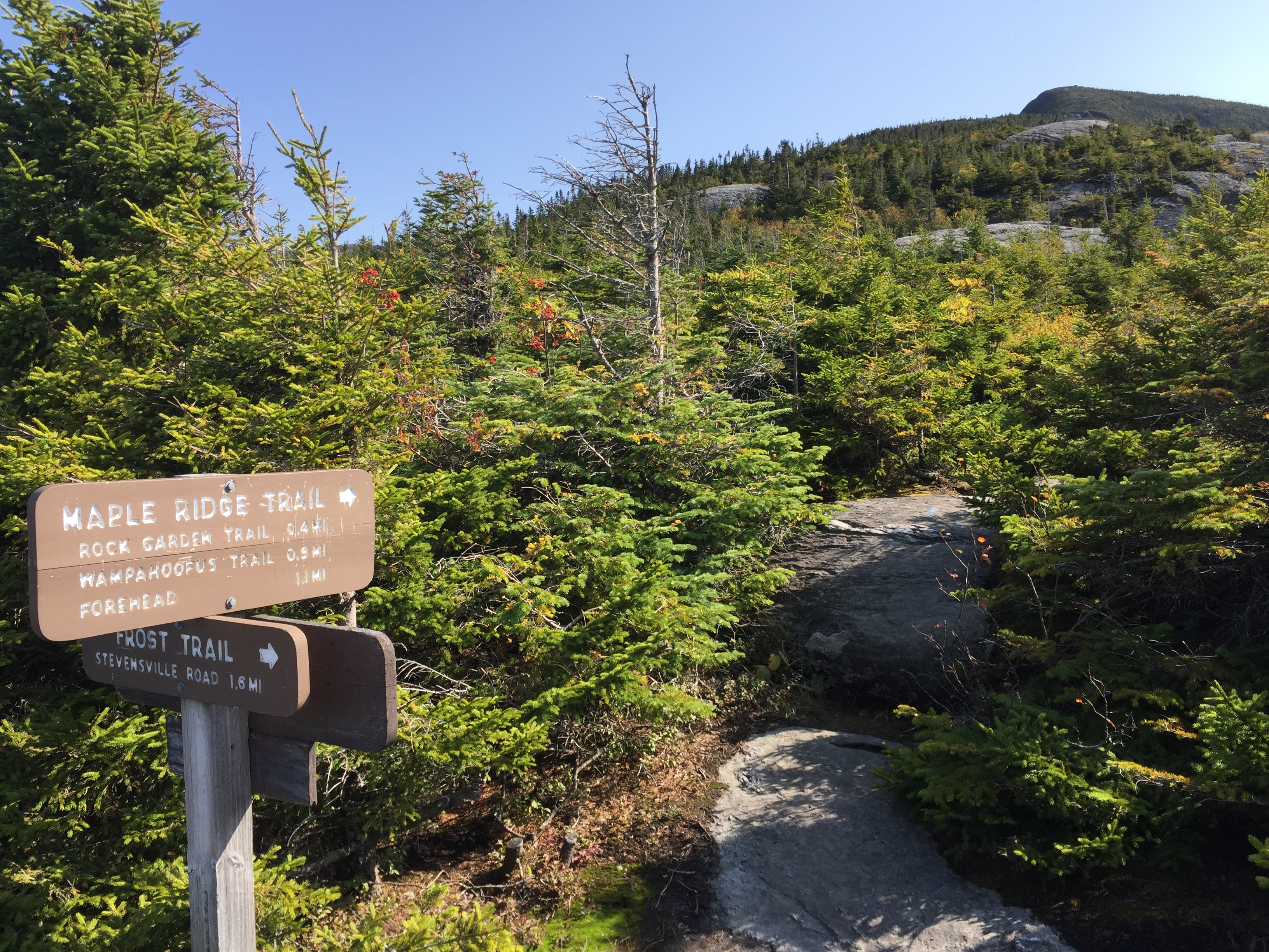 File:2017-09-11 10 27 43 View east along the Maple Ridge Trail at the junction with the Frost Trail on the western slopes of Mount Mansfield within Mount Mansfield State Forest in Underhill, Chittenden County, Vermont.jpg