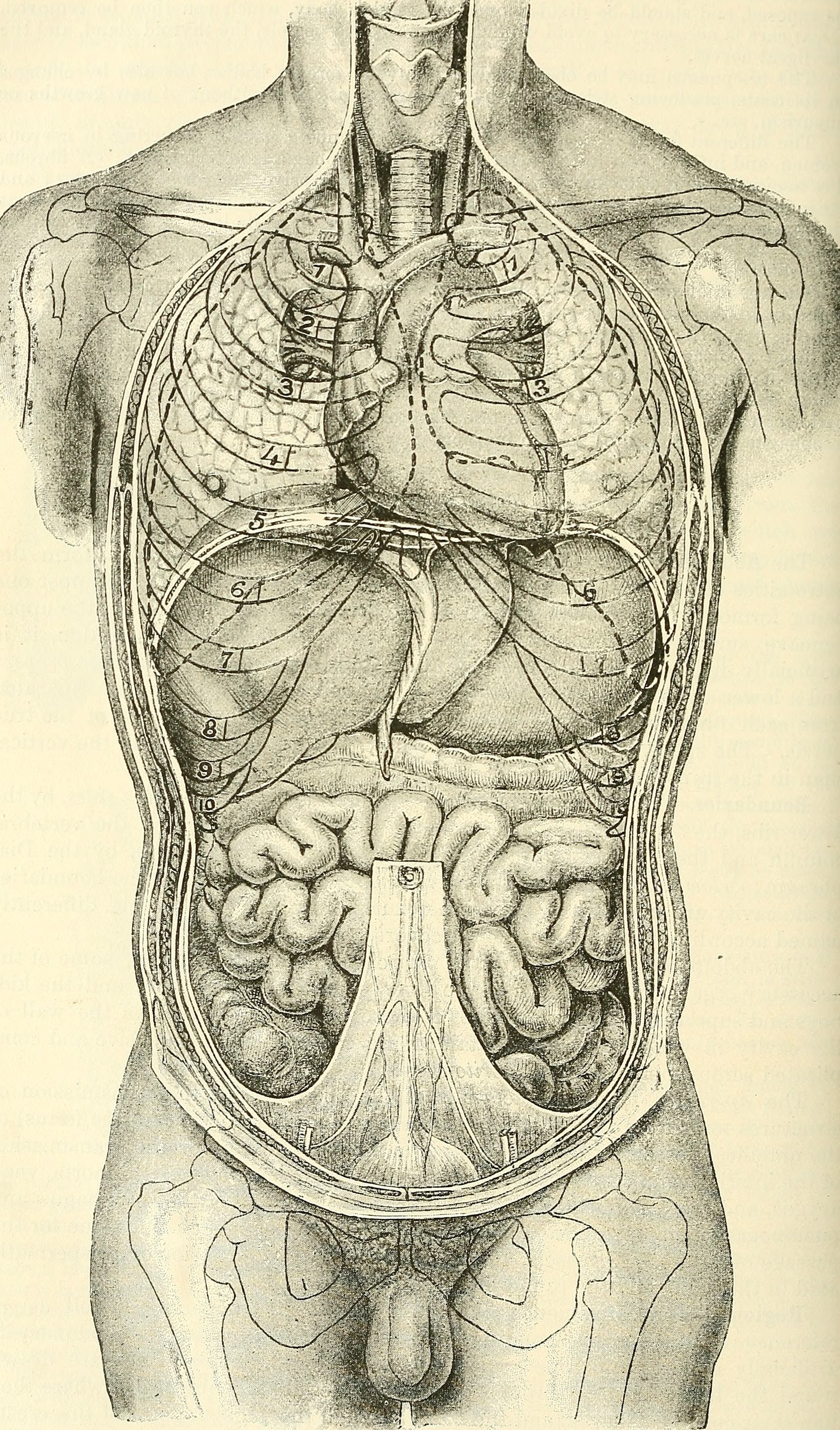 File:Anatomy, descriptive and surgical (1897) (14578413360).jpg ...