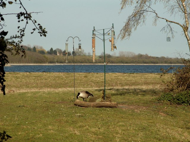 Bird feeders by the Visitors Centre at Abberton Reservoir - geograph.org.uk - 771826