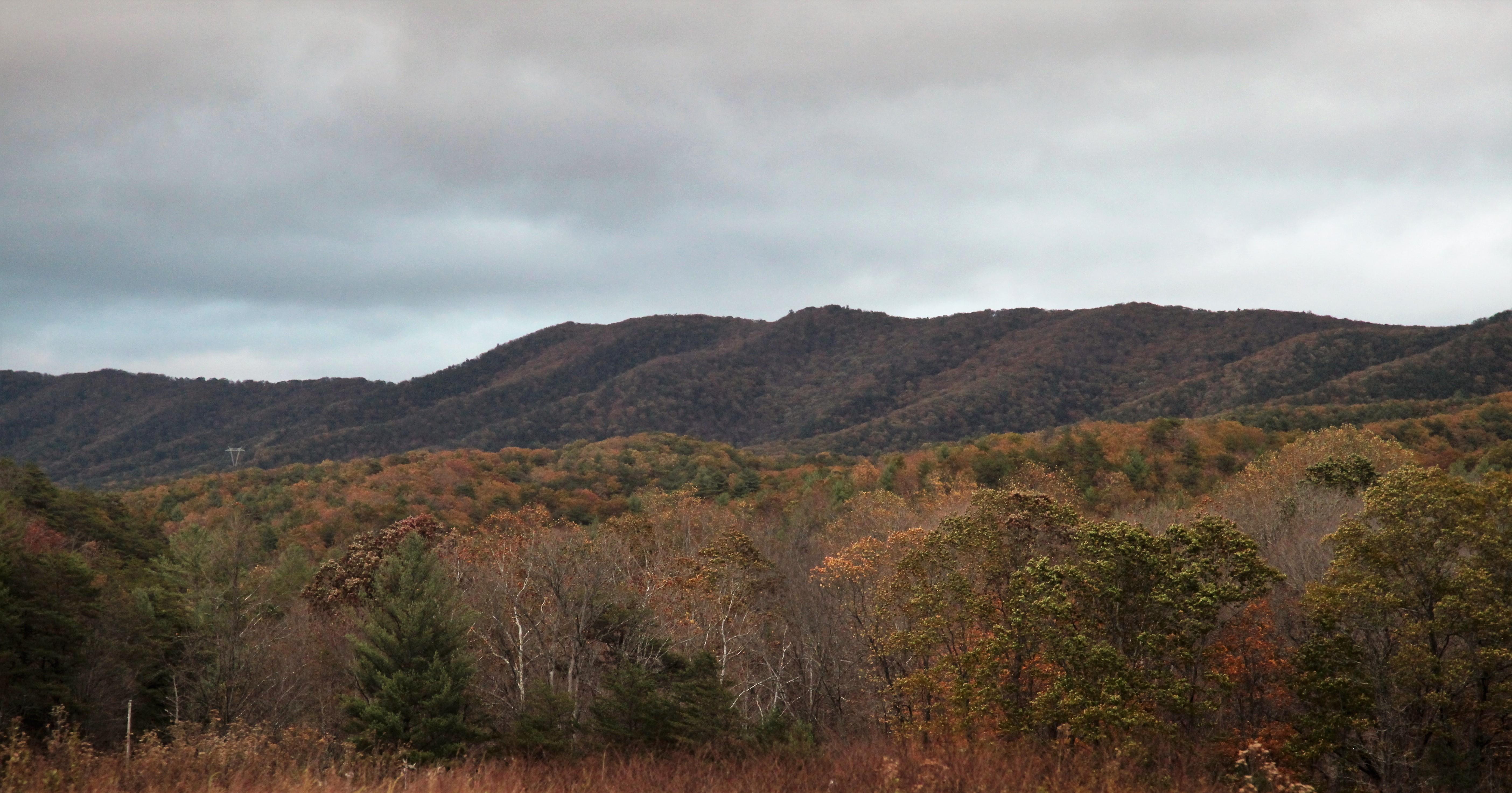 Brush Mtn, in Brush Mountain Wilderness, looking south near Caldwell Fields on Va 635.jpg