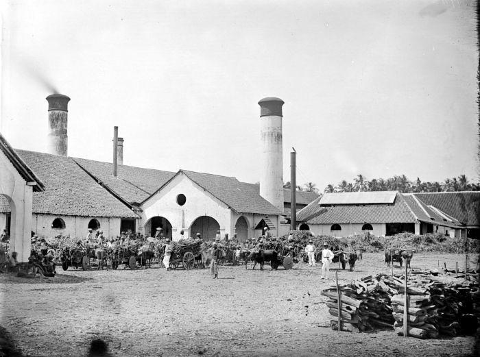 File:COLLECTIE TROPENMUSEUM Aanvoer van suikerriet bij suikerfabriek Kandang Jati residentie Pasuruan TMnr 10022104.jpg