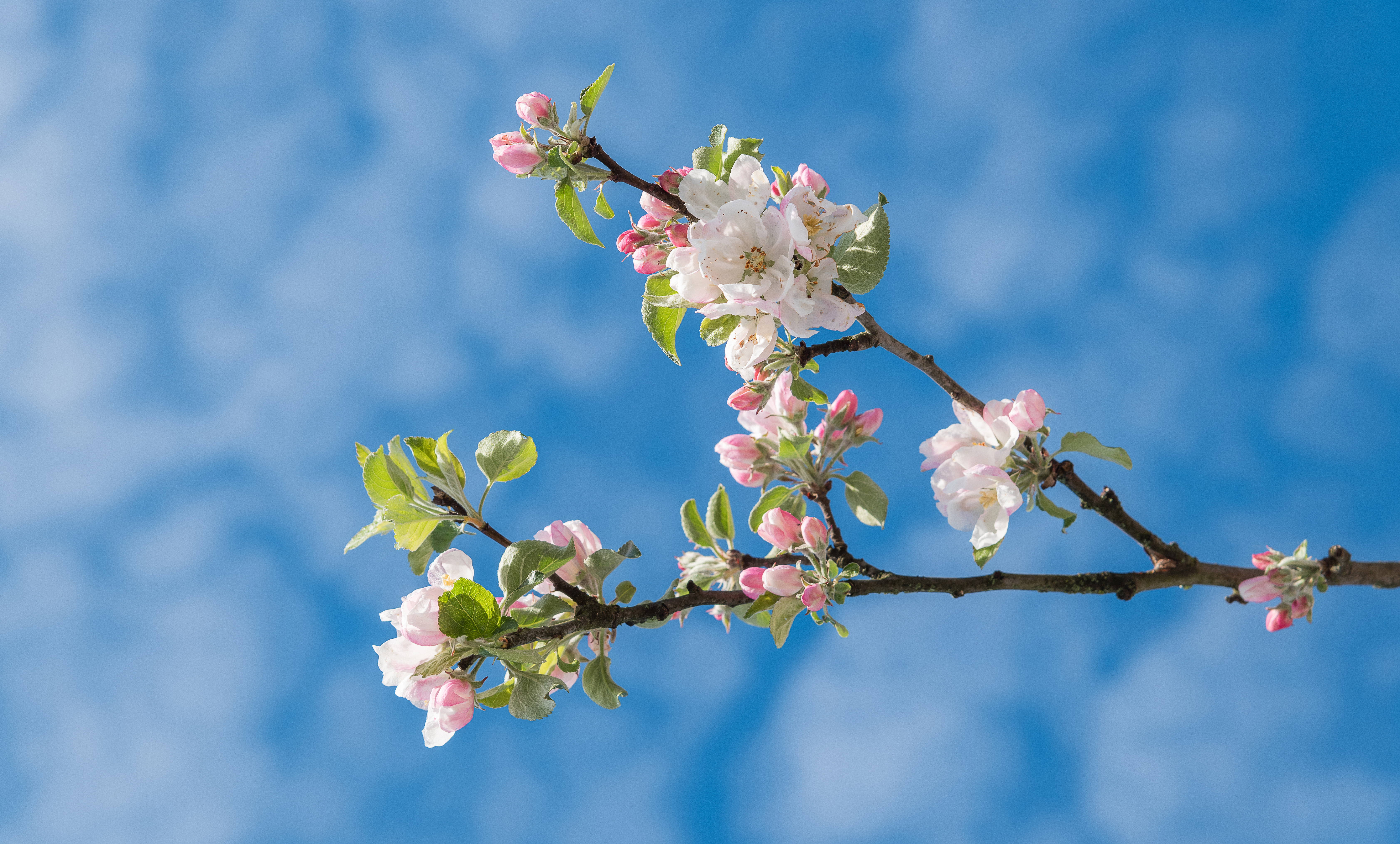 cherry tree hindu dating site Times of india brings the latest news & top breaking headlines on politics and current affairs in india & around the world, sports, business, bollywood news and entertainment, science, technology .