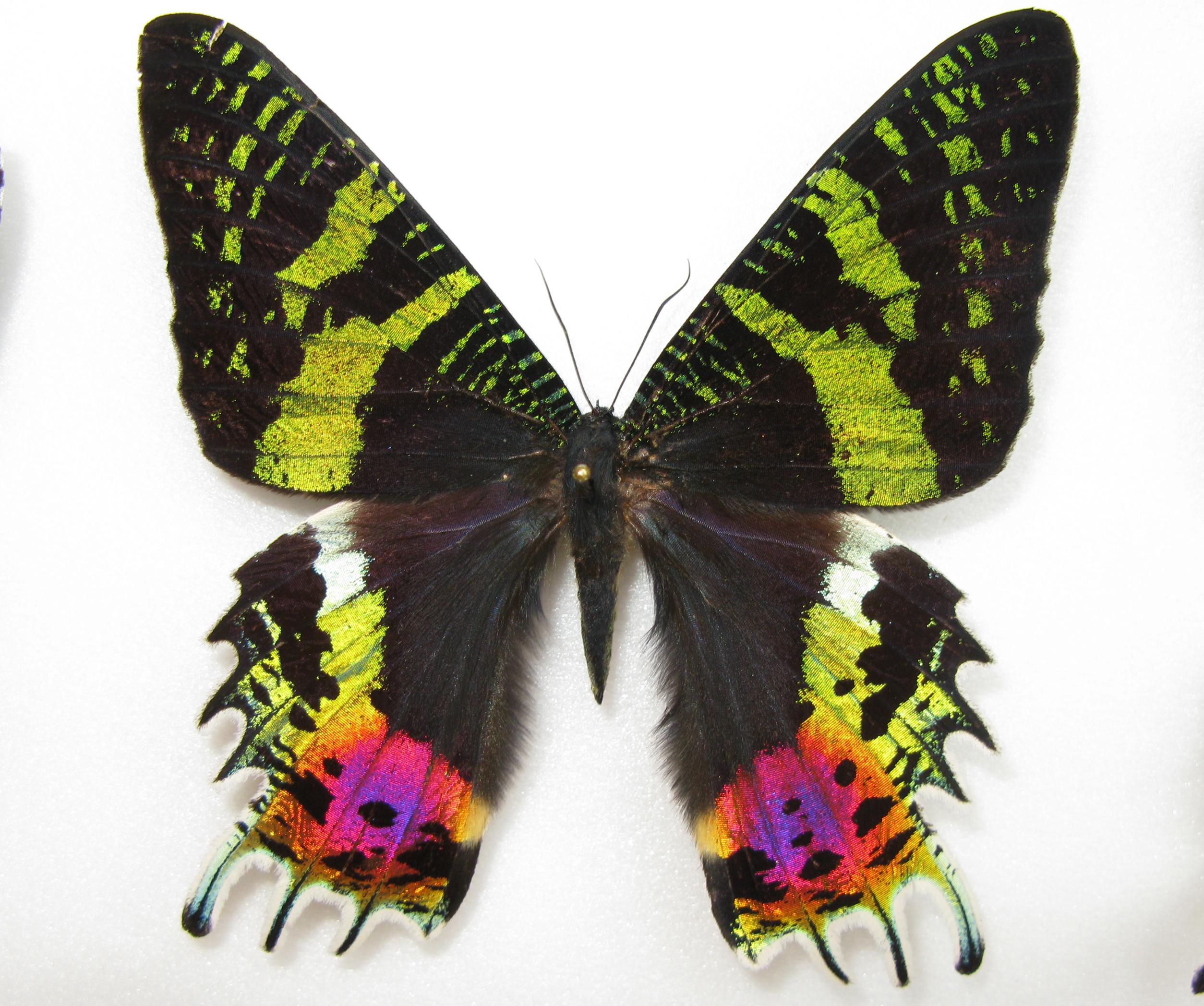 Красивые картинки бабочки 36 фото  Прикольные картинки