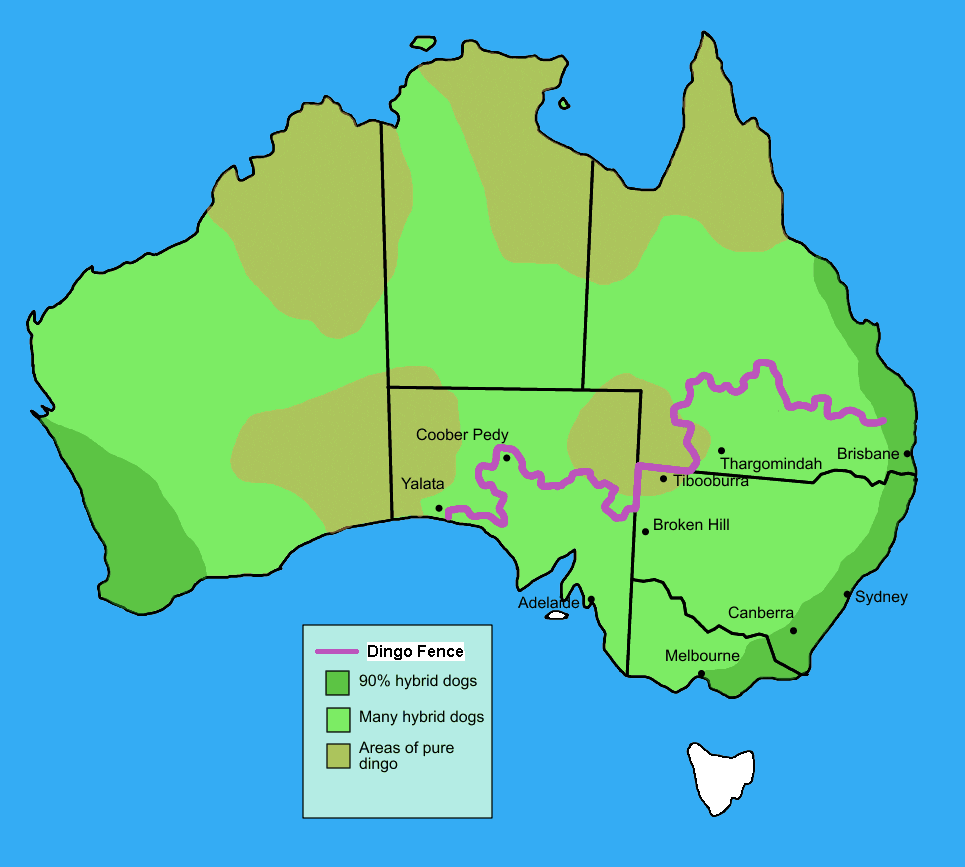 Dingo fence australia map