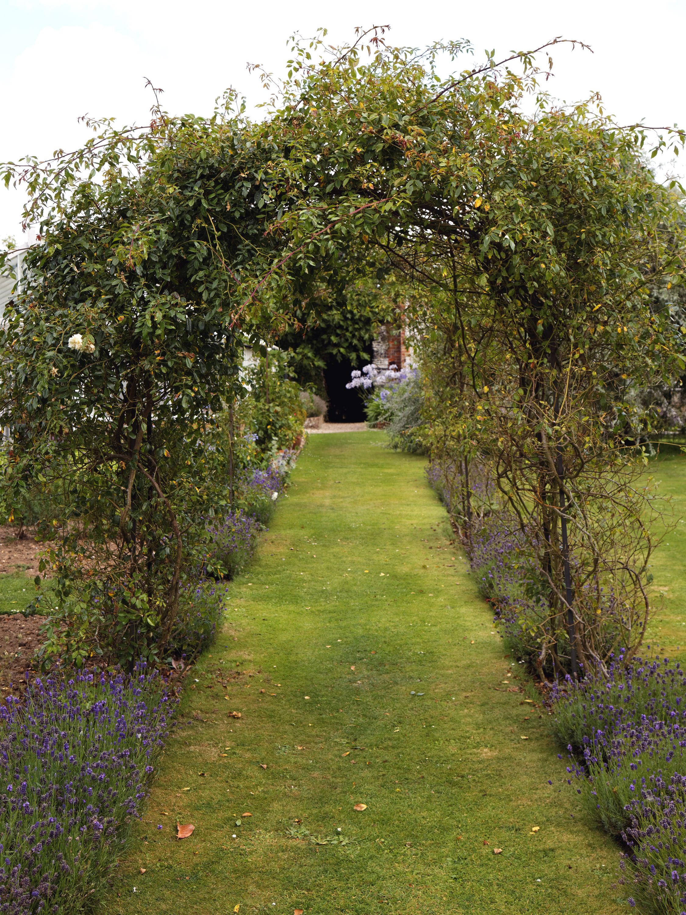 File:Garden lavender path with rose trellis at Goodnestone Park Kent ...