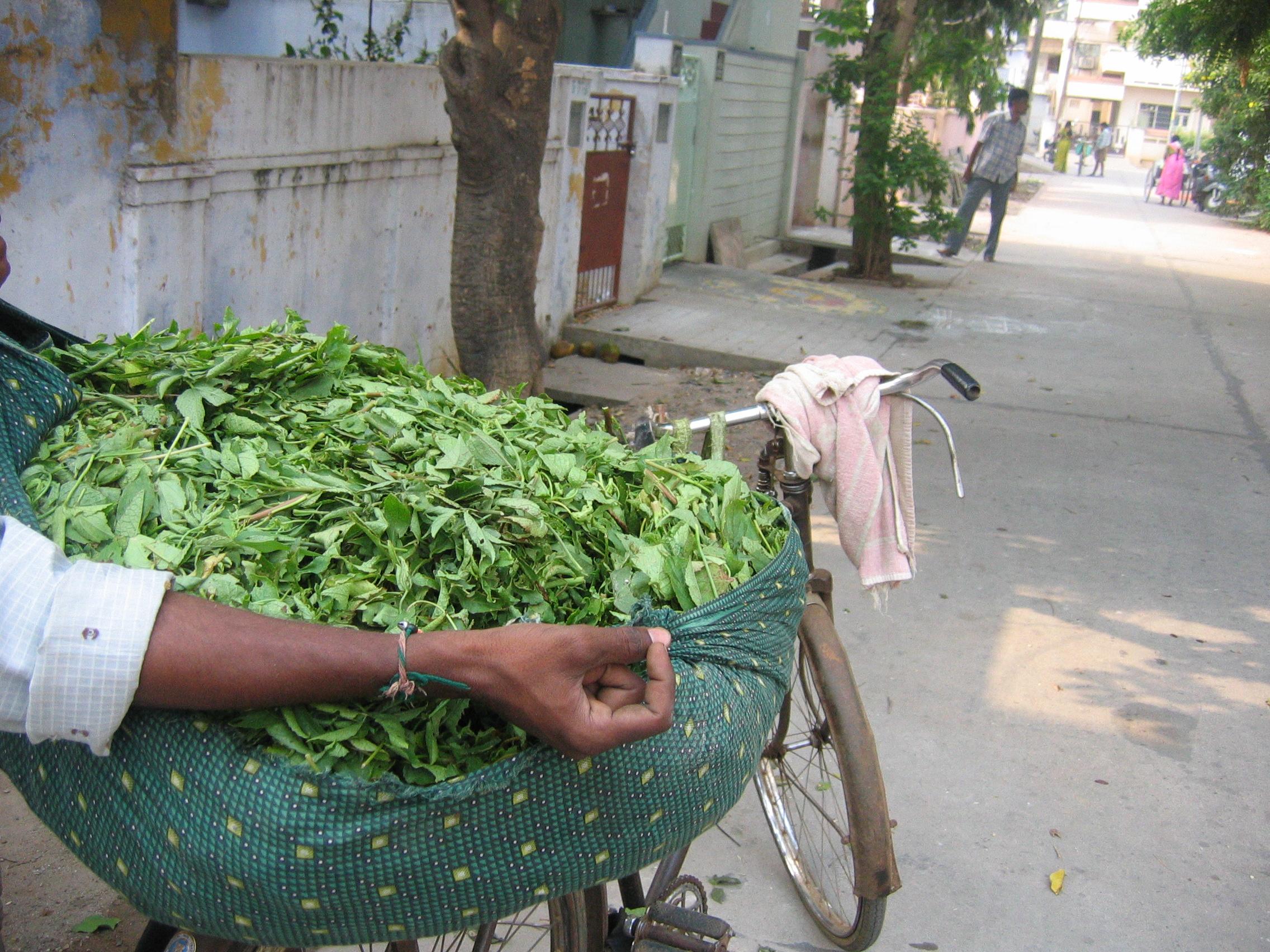 Dried Herb Conversion Chart: Gongura - Wikipedia,Chart