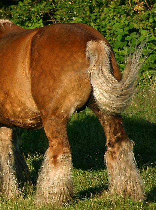 Tail Horse Wikipedia