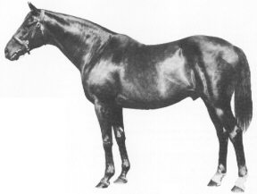 Nearco Italian-bred Thoroughbred racehorse