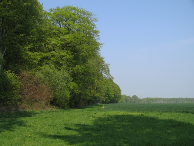 Northern edge of Stourhead Estate - geograph.org.uk - 417389