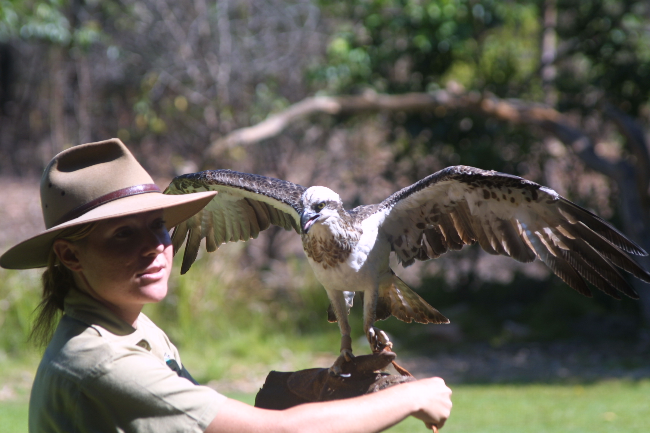 how to become an australian zookeeper