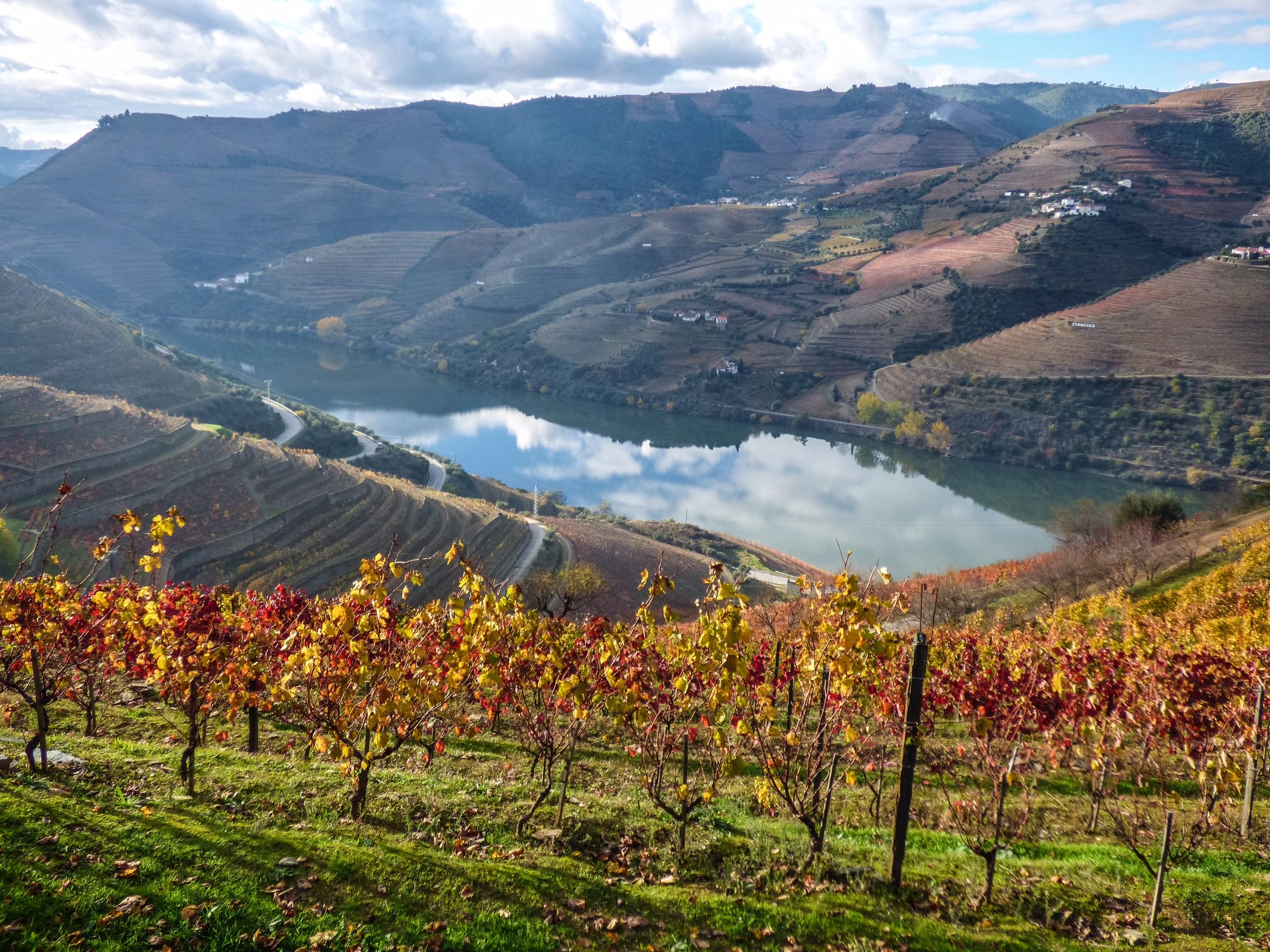 Vinícolas do Vale Douro em Portugal
