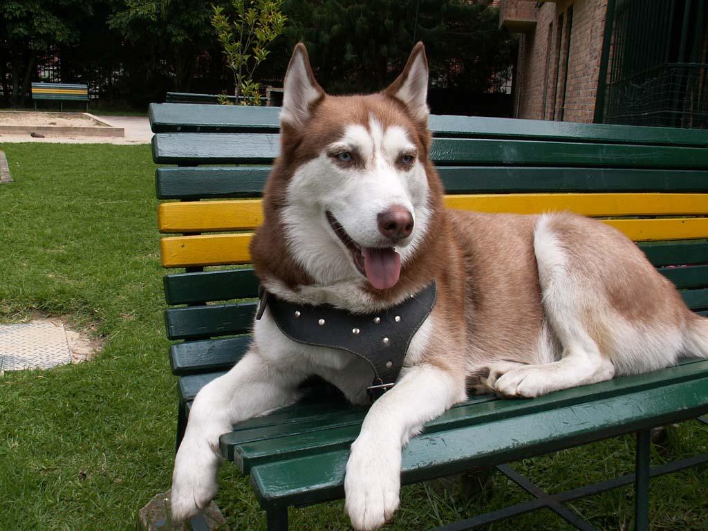 اسعار الكلاب - كلاب للبيع