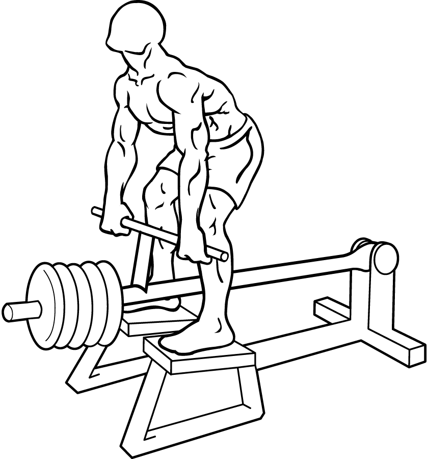 Rowing Machine Build Muscle