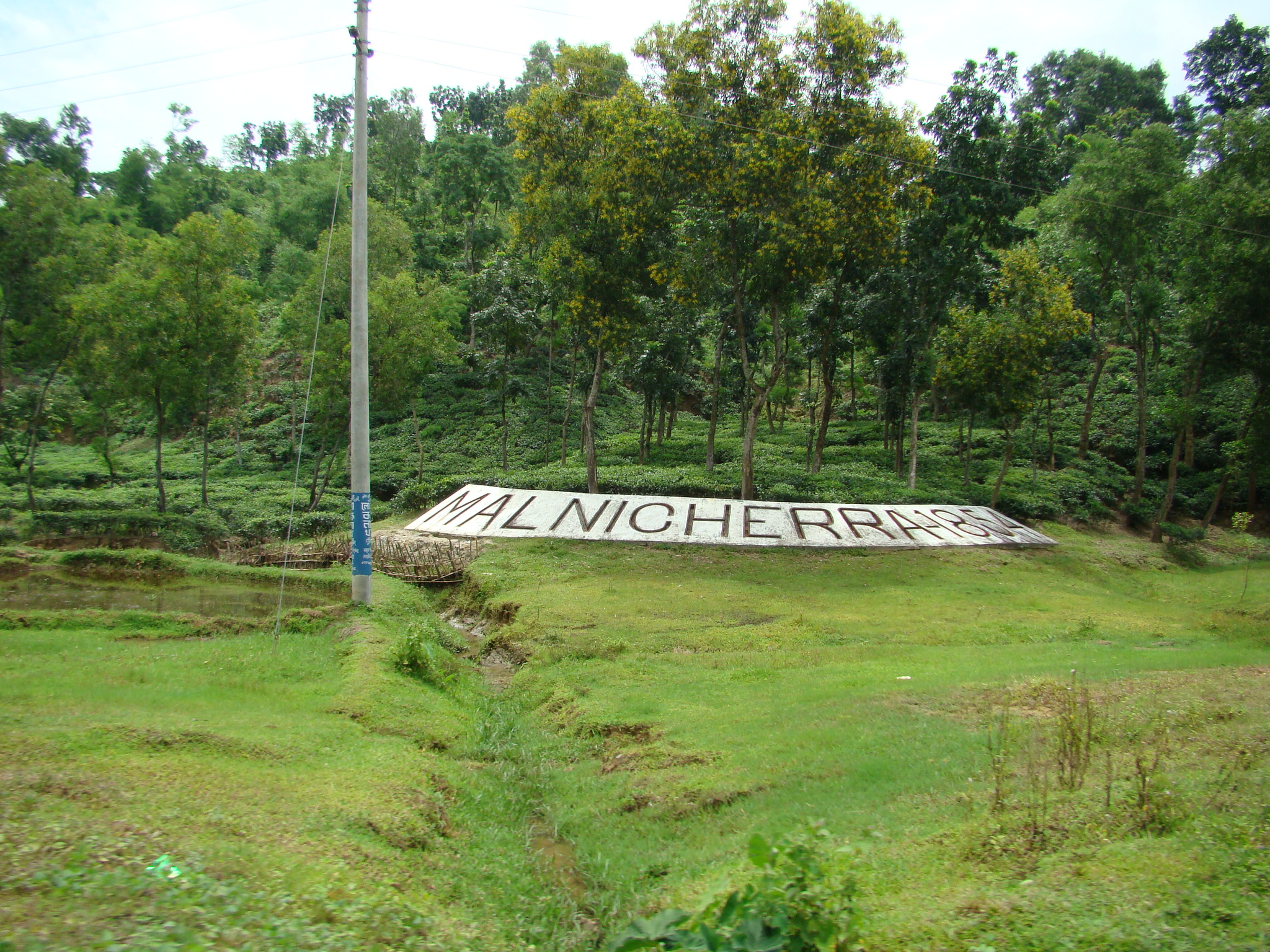 File:Tea Garden in Malini chora Sylhet Bangladesh.JPG - Wikimedia ...