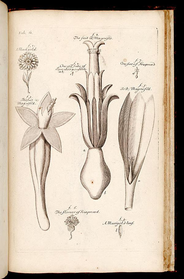 File:The anatomy of plants (Tab. 61) BHL268215.jpg - Wikimedia Commons