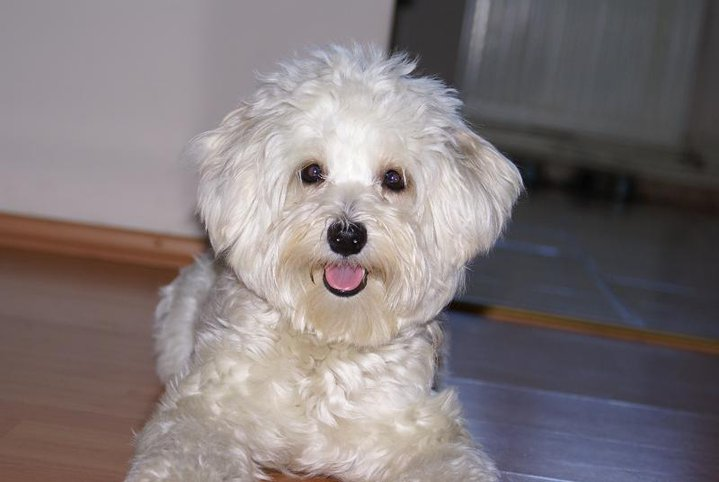 Adult Dogs For Sale In Perth Scotland