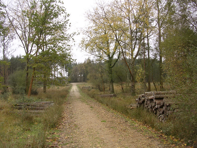 File:Timber stacks in the Ipley Inclosure, New Forest - geograph.org.uk - 70530.jpg