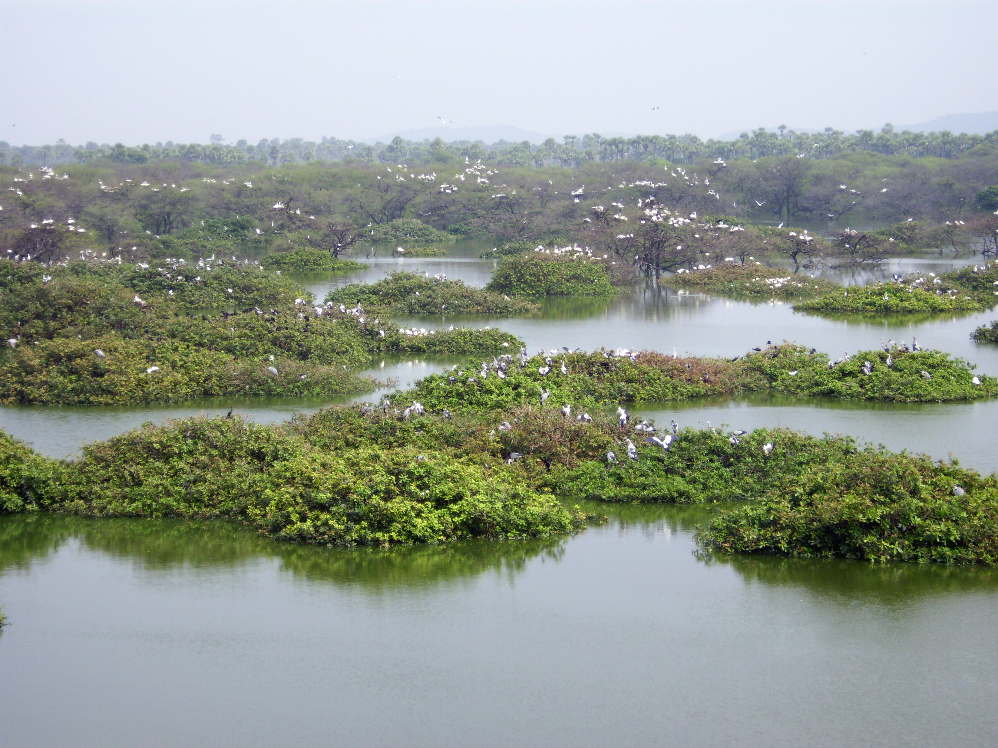 essay on vedanthangal bird sanctuary