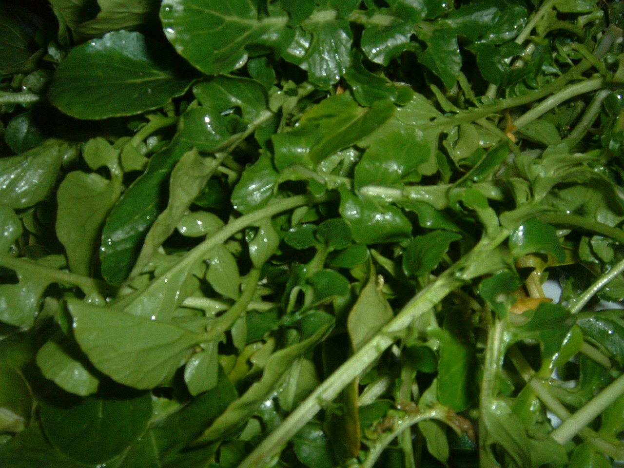 Here 39 s 10 healing foods that can supercharge your life energy for Waterside plants