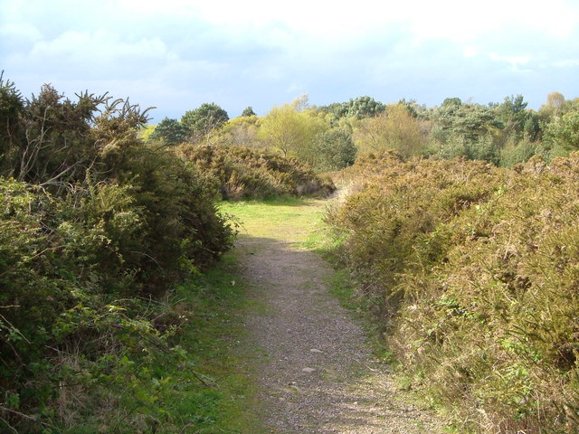Woodbury Common - geograph.org.uk - 163106