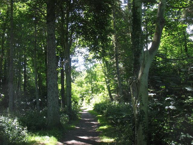 Woodland walk - geograph.org.uk - 874918