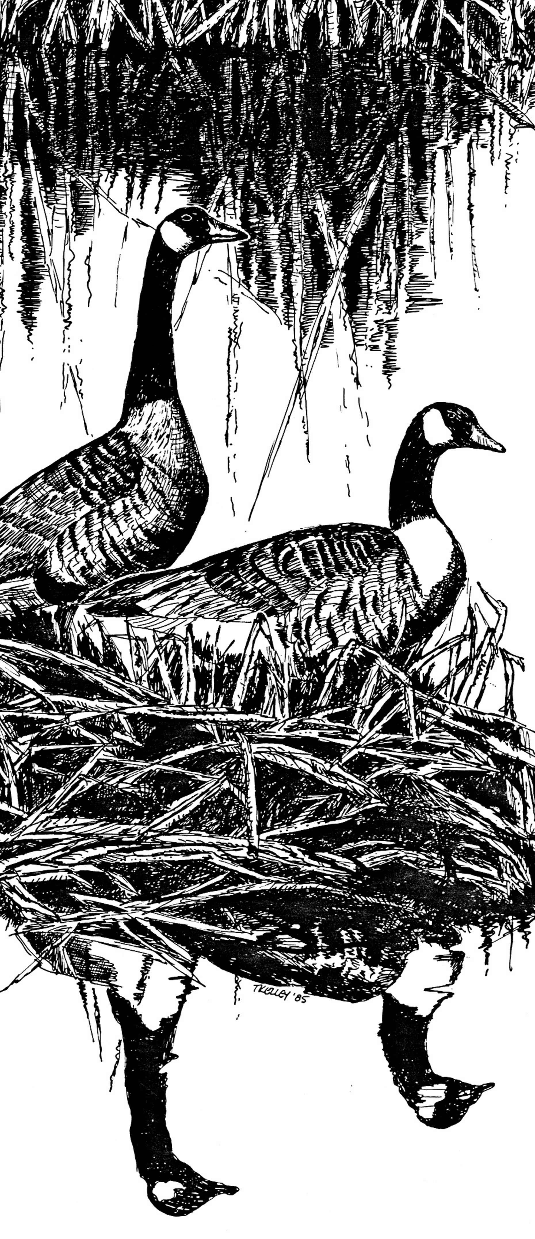Line Work Art : File canada geese art work line drawing g wikimedia