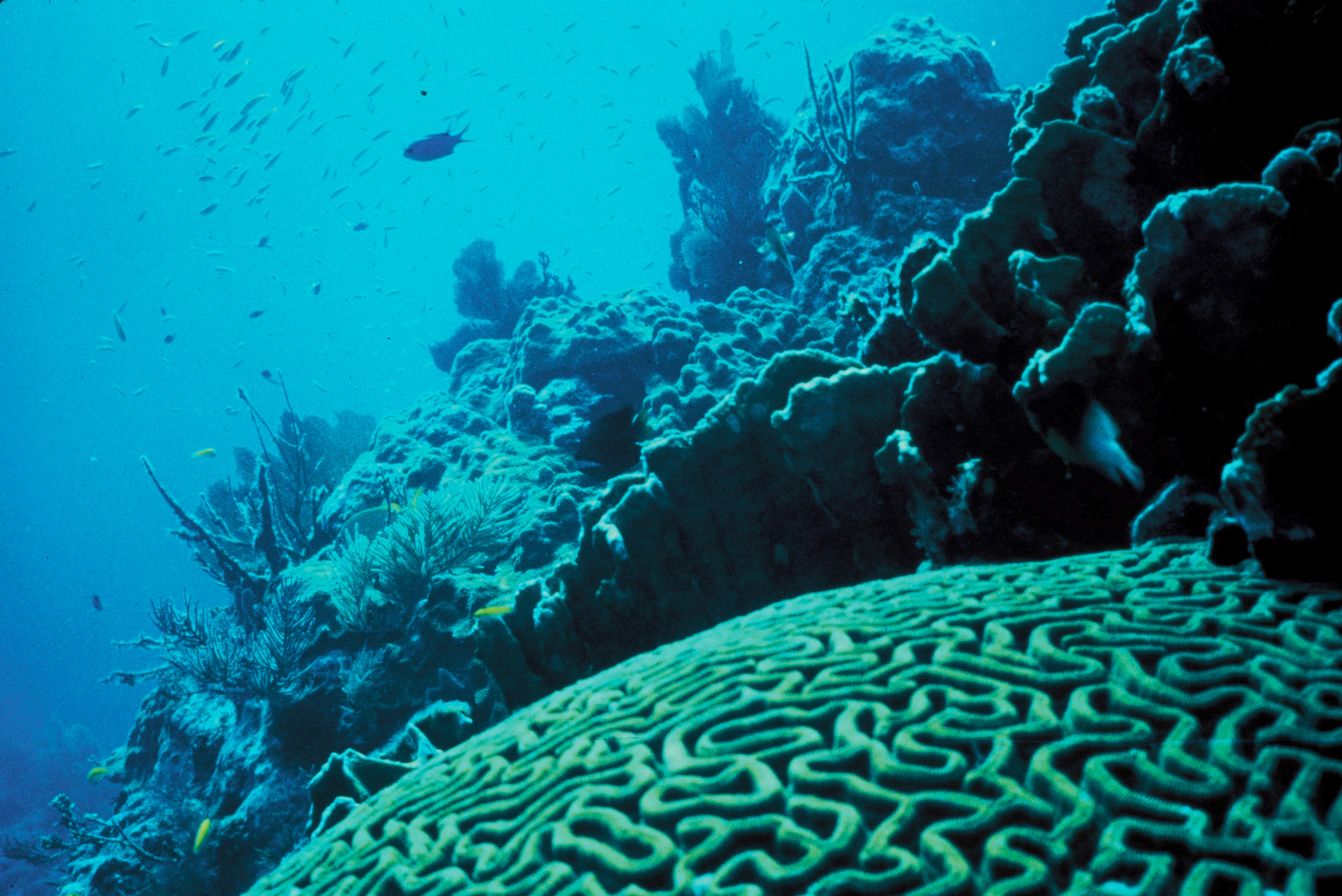 Coral Reef Pictures 82