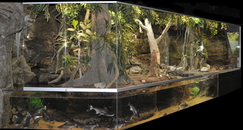 File Dkoehl 2010 Tropicarium Terrarium Reticulated Python